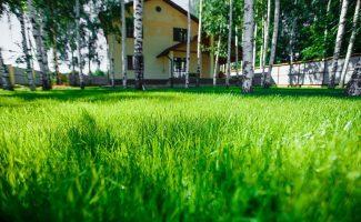 Великолепный газон летом: чем подкормить
