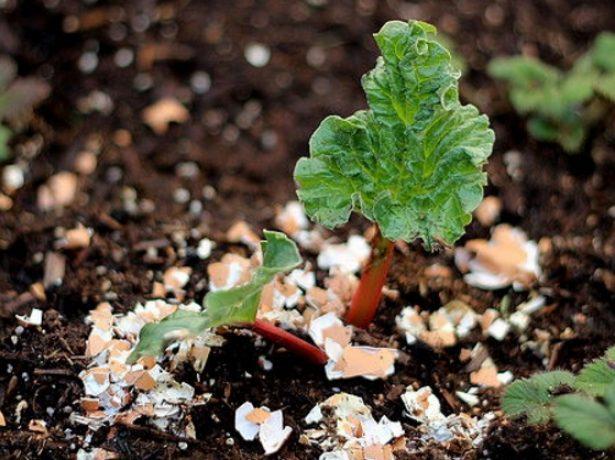 Скорлупа вокруг растения