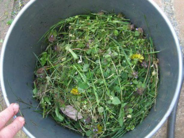 Сорняки для настоя трав