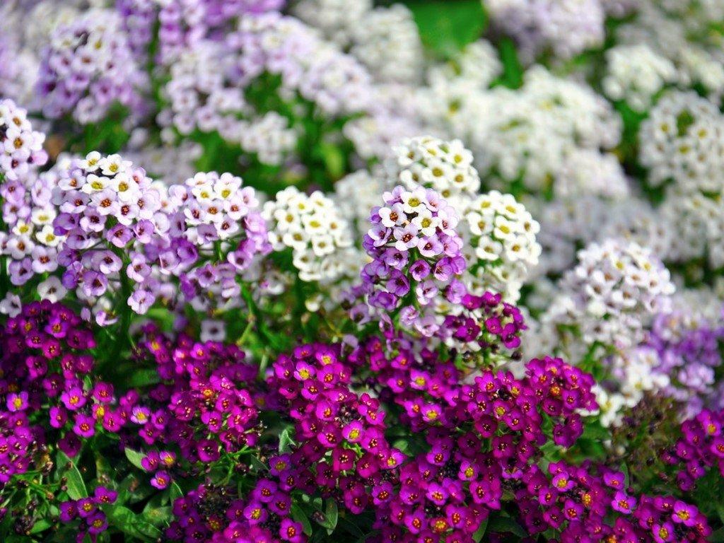 Обзор почвопокровных растений: 20 эффектных вариантов для вашего сада