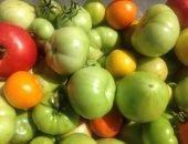 Дозаривание томатов