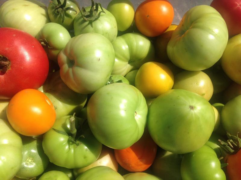 Правила дозаривания помидоров