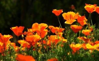 Июль — самое время сажать цветы