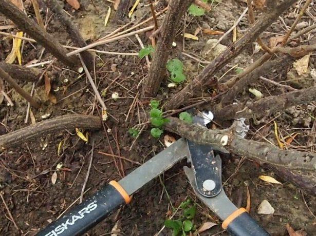 Обрезка под корень