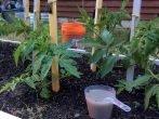 Подкормка помидоров кальциевой селитрой