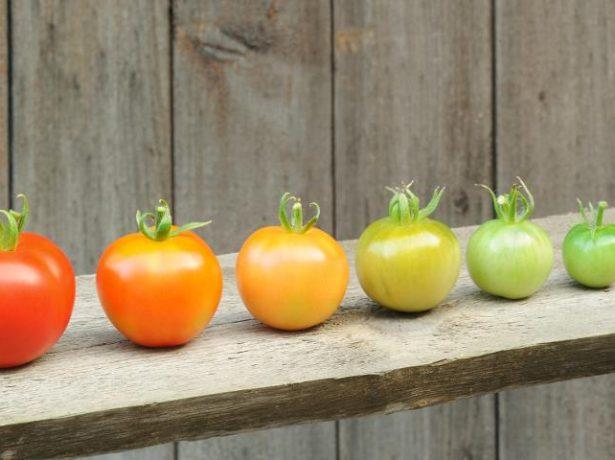Стадии зрелости томатов