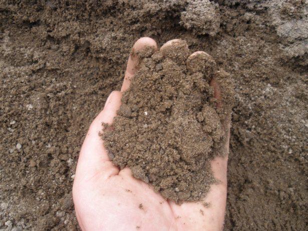 Горсть лёгкой почвы