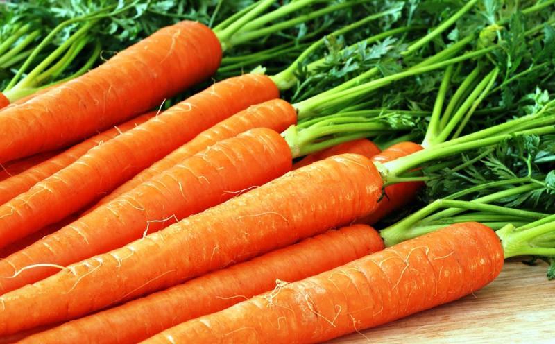 Надо ли обрезать морковную ботву: разбираемся, как не погубить урожай