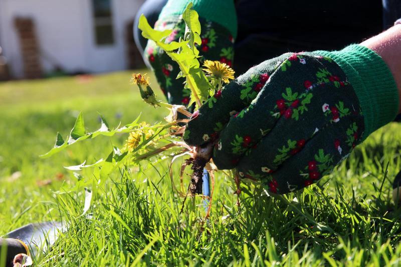 Один в поле воин: стратегия победы в неравной борьбе с сорняками