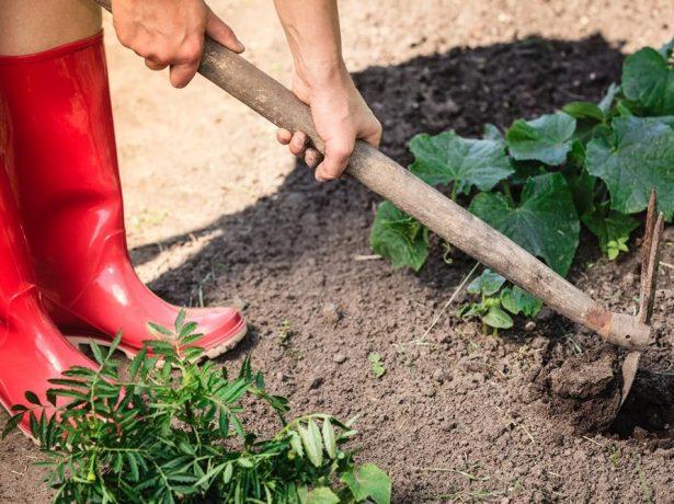 Девушка в красных сапогах рыхлит землю комбинированным рыхлителем