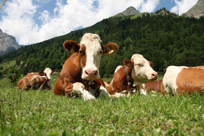 Какой навоз лучше: конский или коровий?