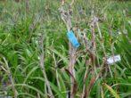Лилейники осенью: готовим цветы к зимовке правильно