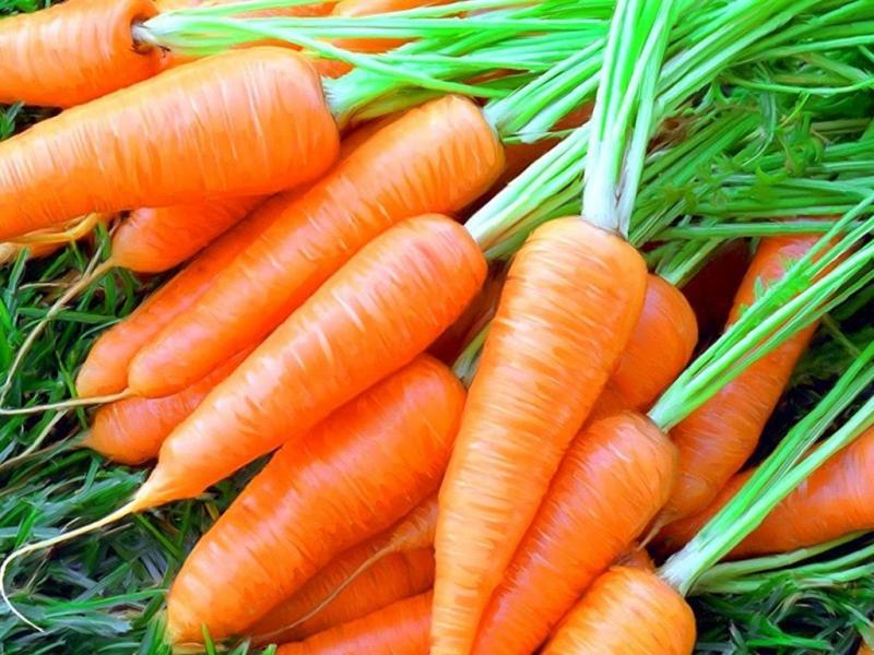 Как сохранить морковь в погребе до следующего урожая