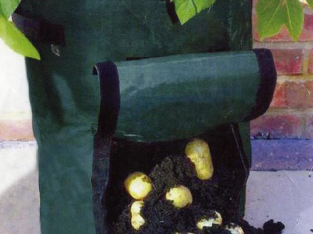 Картошка растёт в мешке