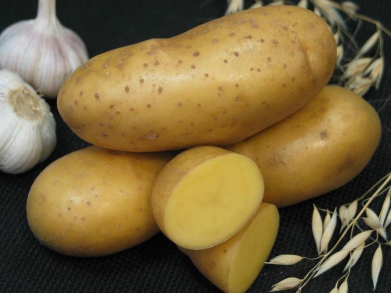 Картофель Императрица начинает и выигрывает