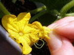 Опыление цветком