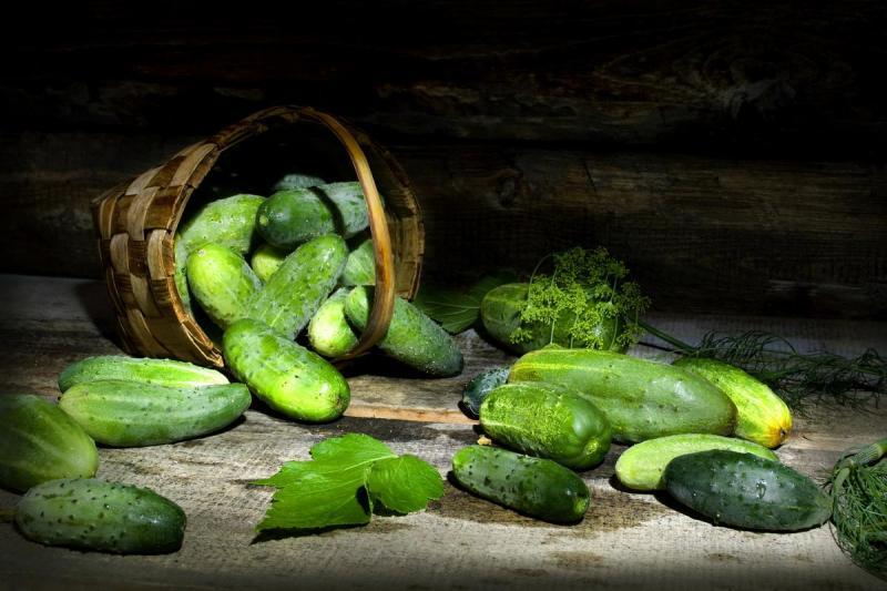 Как выращивать вкусные огурчики зимой в домашних условиях