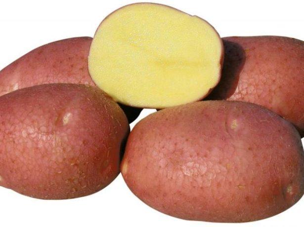 картофель Роко