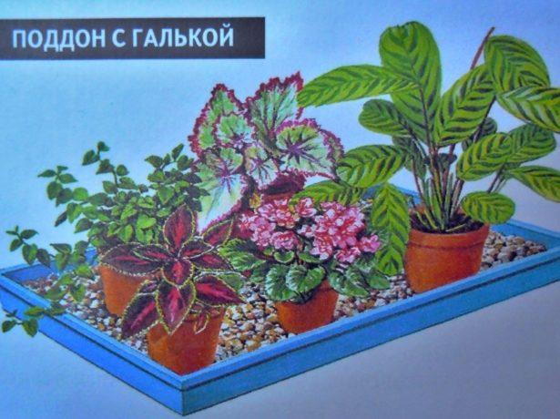 Поддон с цветами