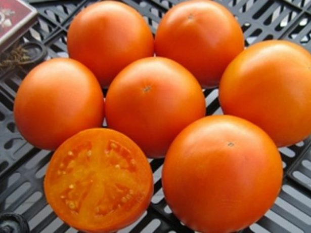 Томаты Апельсин
