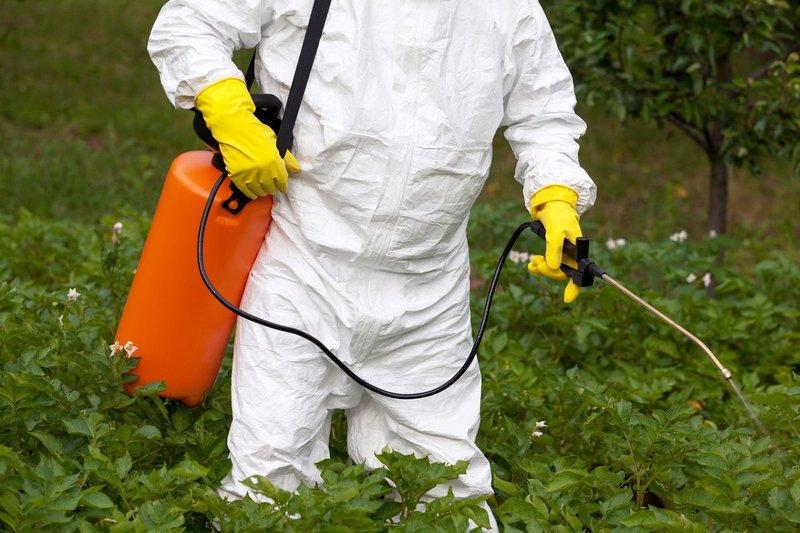 Фитоспорин — полюбившийся дачникам биологический помощник в борьбе с болезнями растений