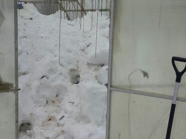 Теплица, полная снега