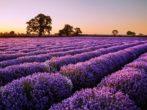Какие цветы посадить на рассаду в феврале: подборка популярных вариантов