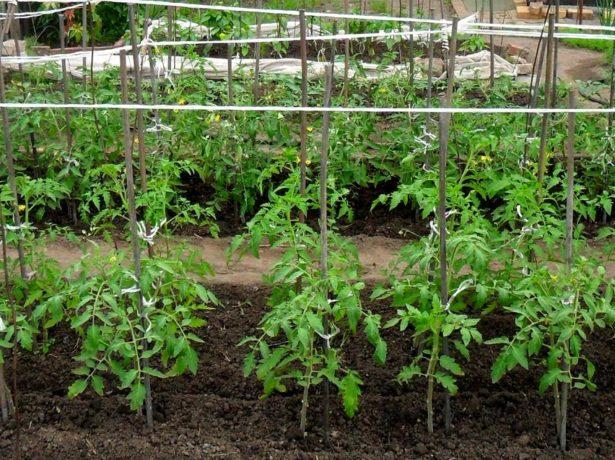 Подходящее место для высадки томатов