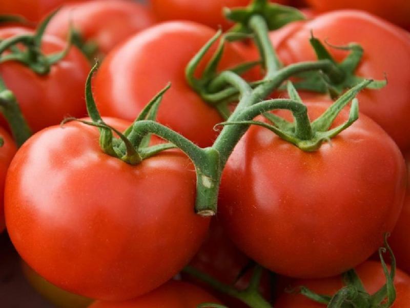 Клуша: популярный ранний сорт томатов
