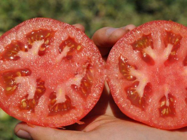 Плоды томата Верлиока