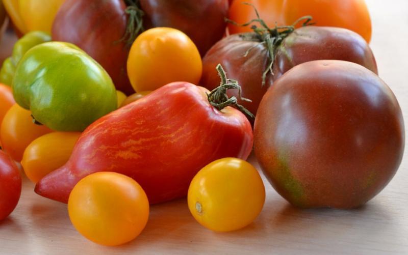 Pomme d'amour от Москвы до самых до окраин: способы выращивания помидоров в разных регионах