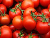 томат верлиока