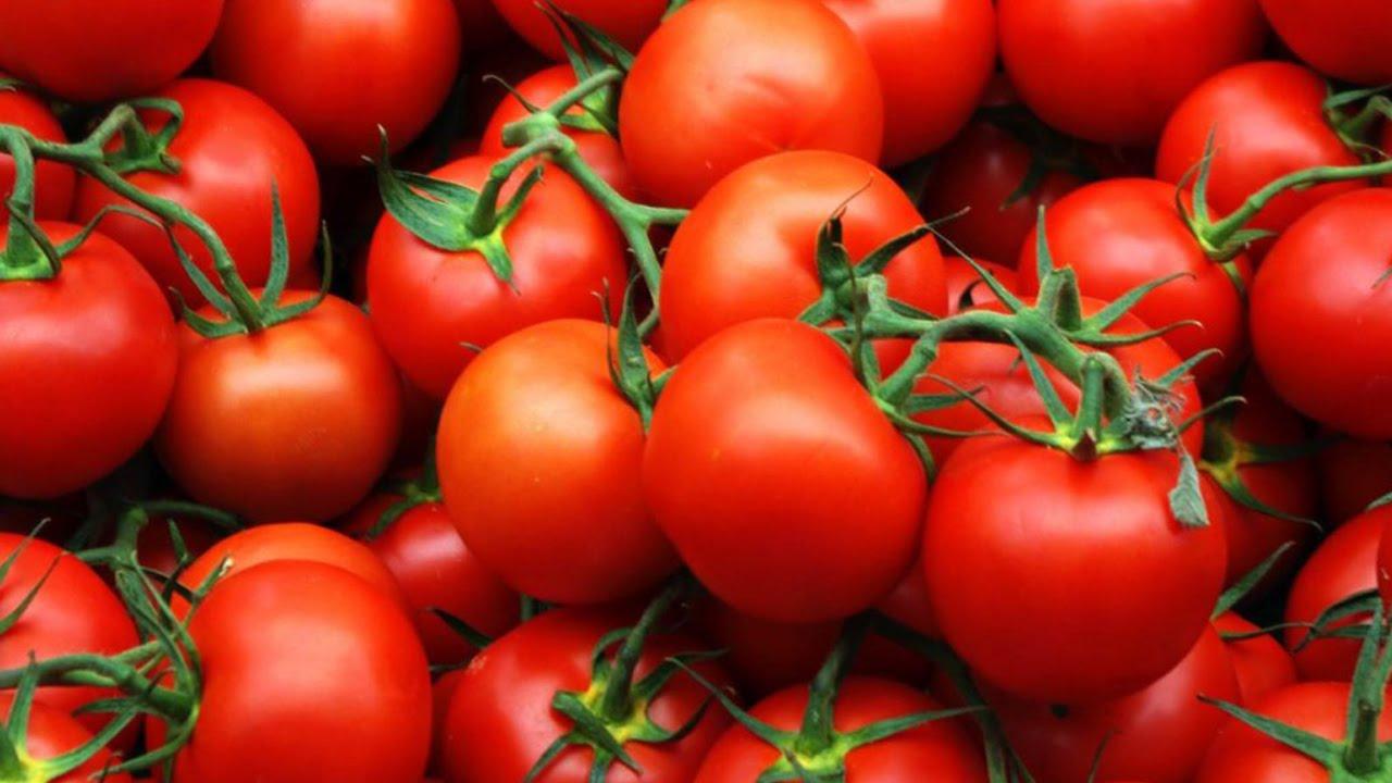 Томаты Верлиока — отличный выбор для огорода