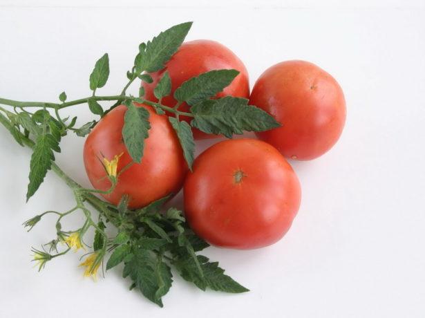 Ветка томатов сорта Гном