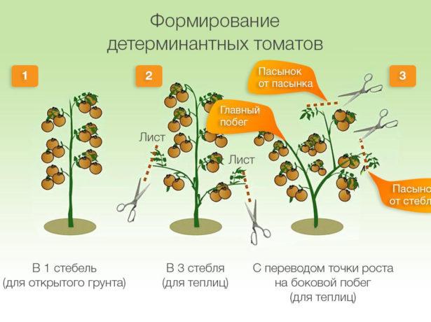 Схематическое изображение основных способов формирования кустов детерминантных томатов