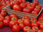 Сорт томатов Валентина