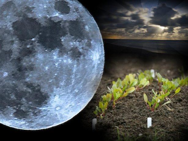 Положение луны влияет на развитие растений