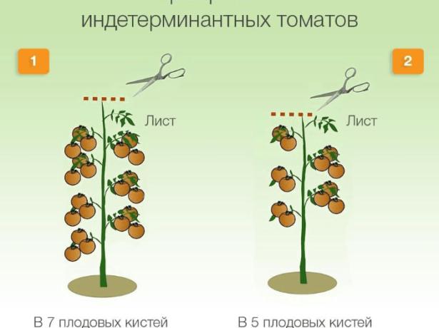 Прищипка индетерминантных томатов