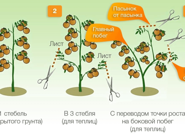 Схема формирвания детерминантных сортов томатов