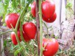 Плоды на ветках