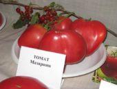 Томат Мазарини (Биотехника)