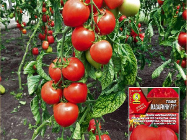 Куст томатов Мазарини (Аэлита)