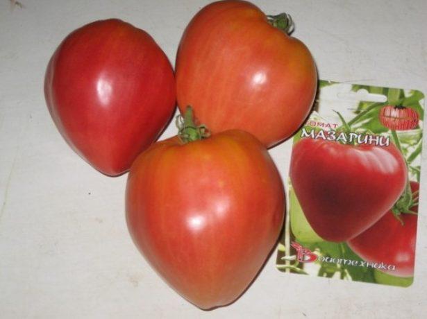 Зрелые плоды томатов Мазарини