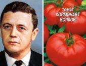 Сорт томатов в память погибшего космонавта.