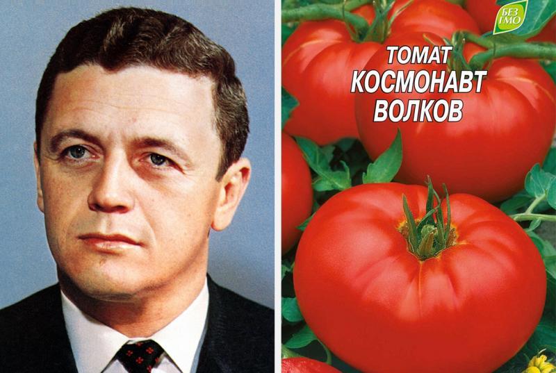 Сорт томатов, названный в память погибшего космонавта Владислава Волкова
