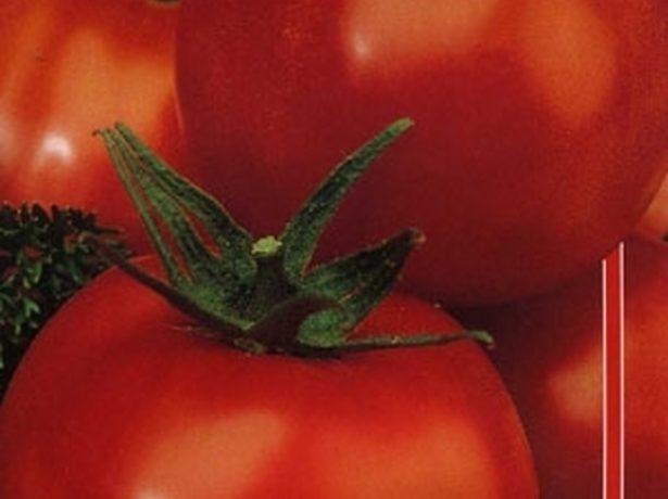 семена томата Дубрава
