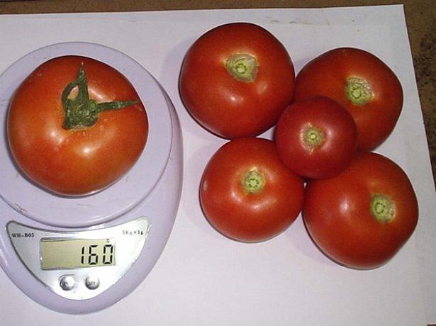 Вес плодов томата Катя