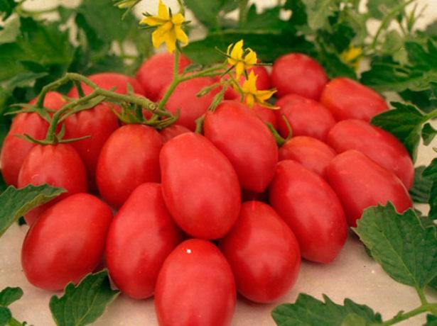 Плоды и цветок сорта томата Ракета