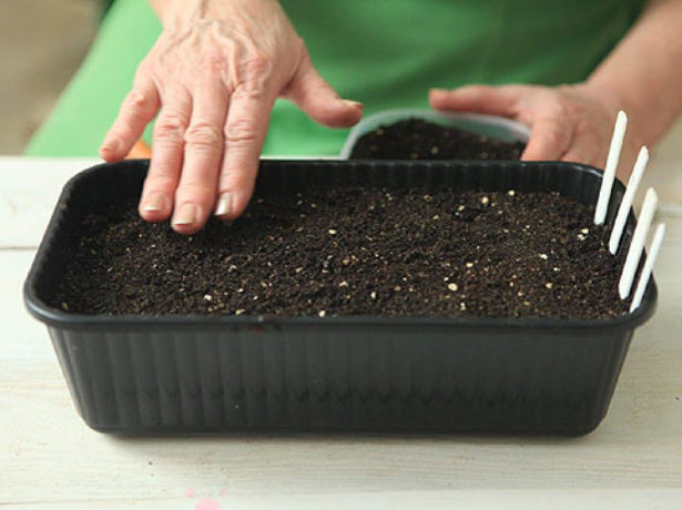 Семена посеяны в контейнер