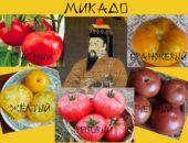 Микадо – император и помидоры.
